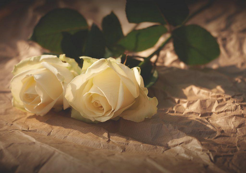バラの花のプレゼント